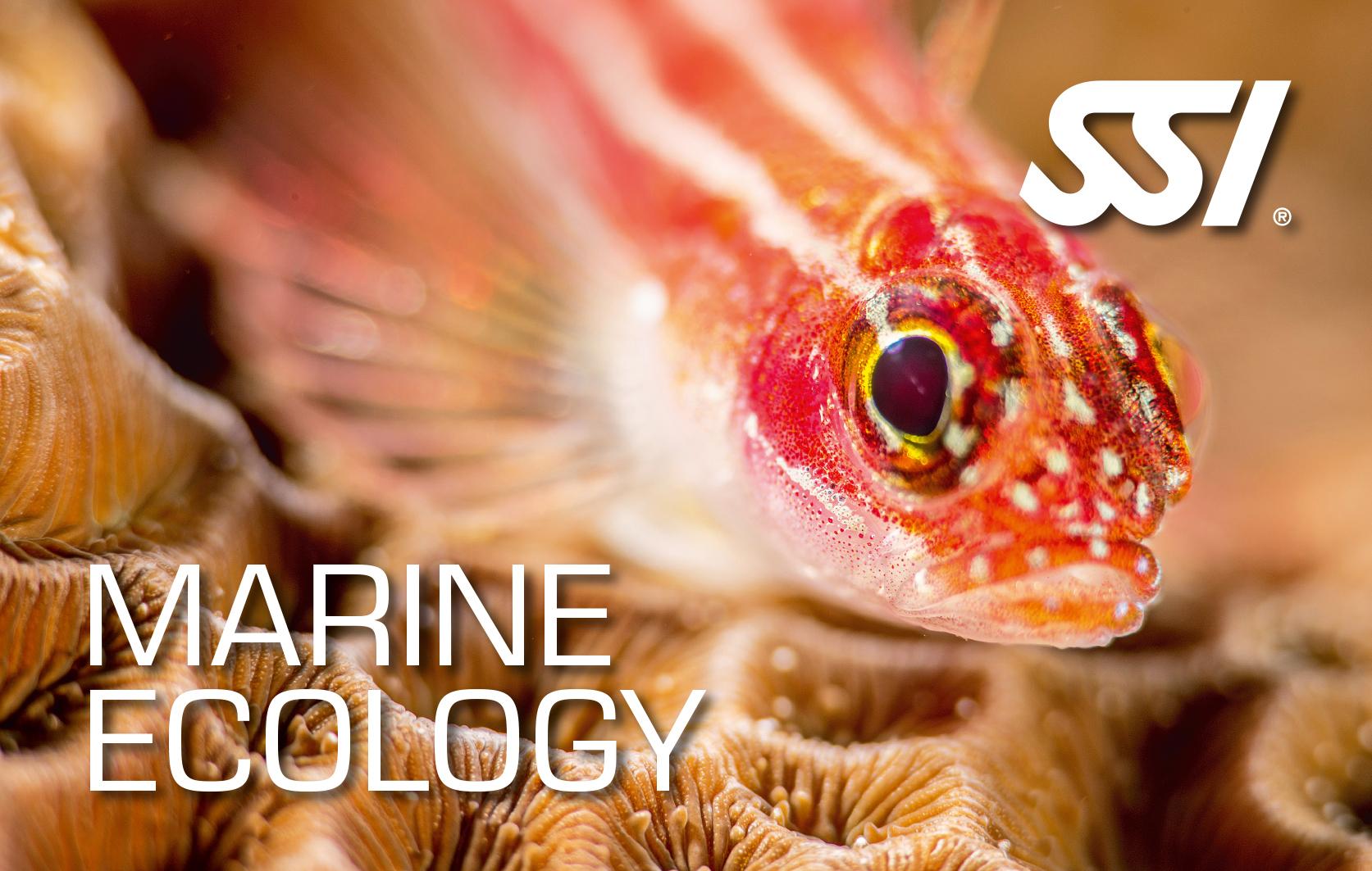 Meeresökologie