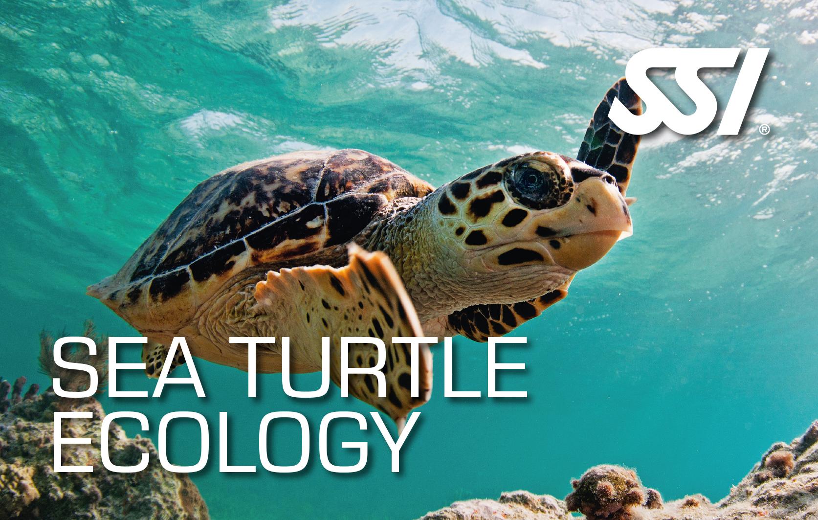 Seeschildkröten Ökologie